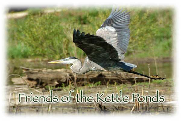 Friends of the Kettle Ponds